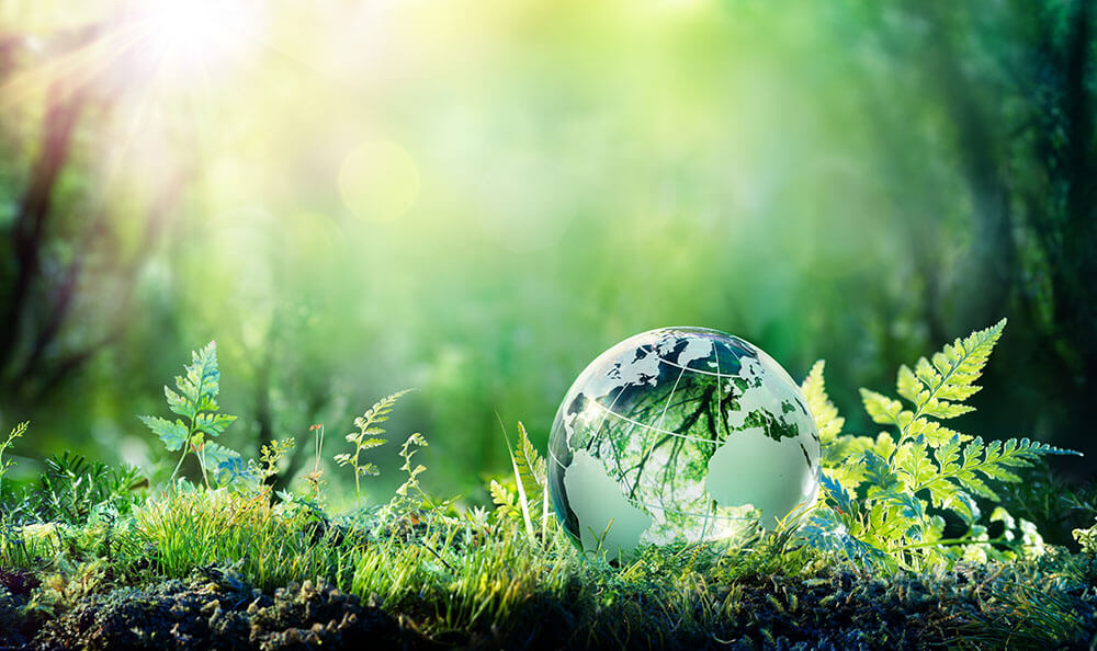 Sustainability - what does it actually mean - glass globe is in the greenery